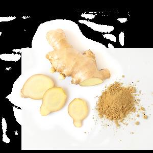 Gingembre - Gember - Ginger